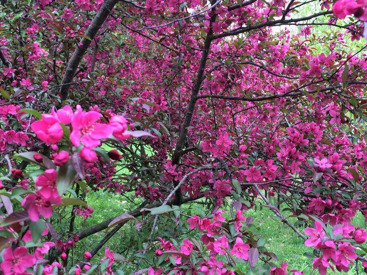 flowering trees 2017 04 29 12 07 18
