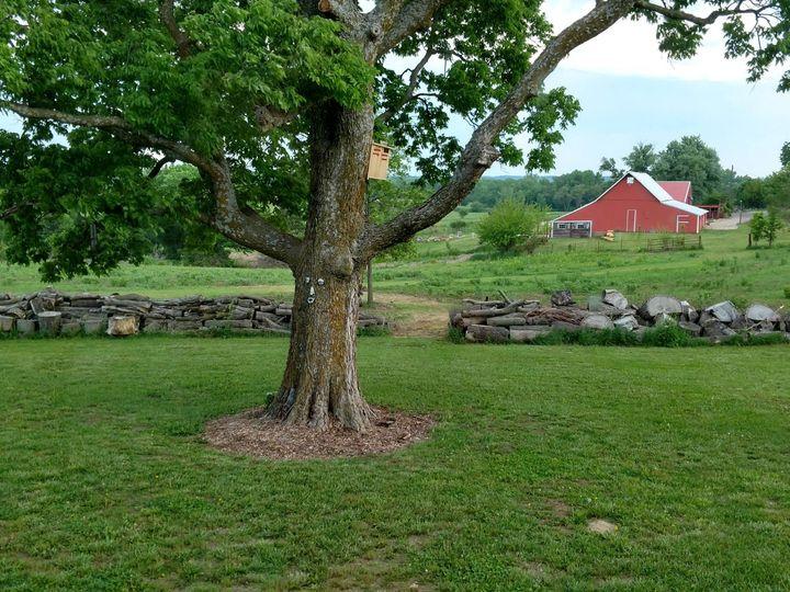 Tmx Big Tree With Barn Background 51 750173 1566055311 Ozawkie, KS wedding venue