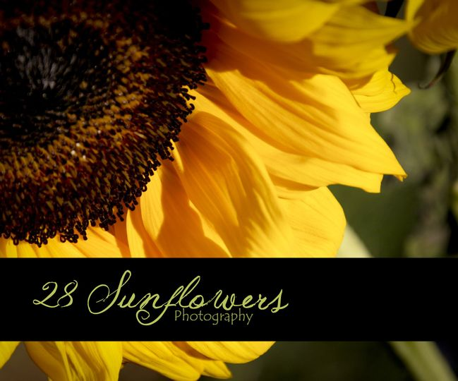 28 Sunflowers Photography