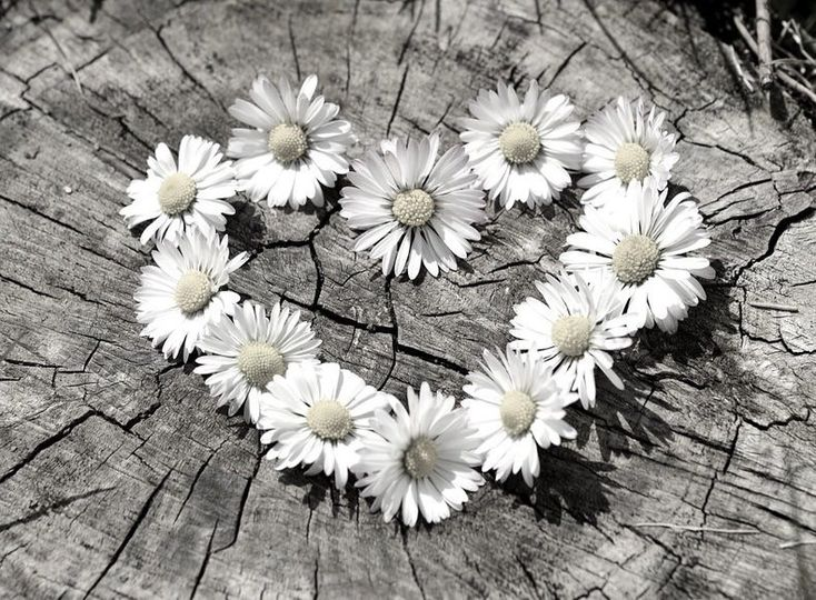 Daisy Chain Gifts
