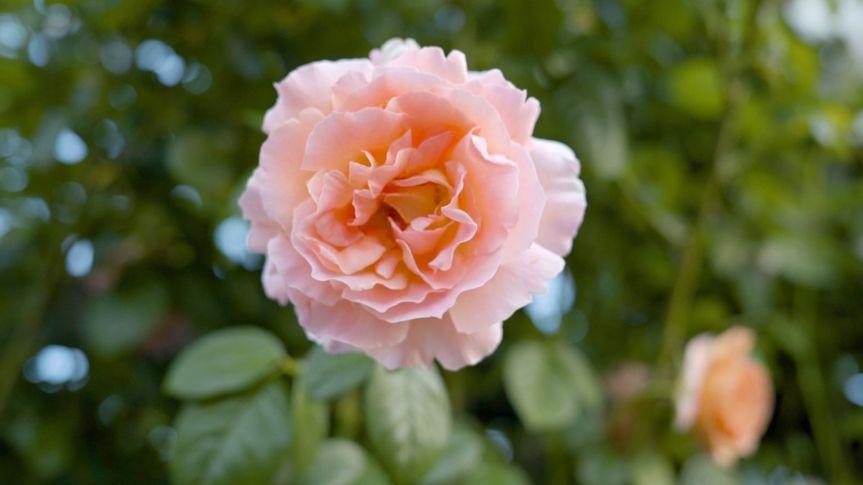 flower 51 1016273 v3