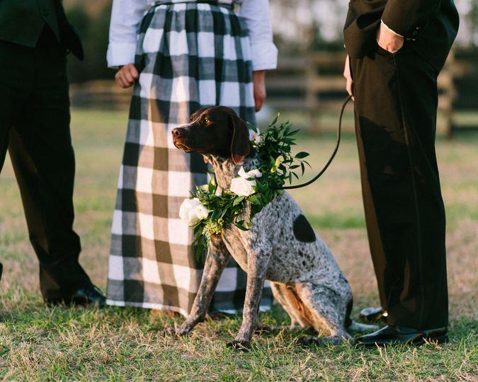Dog with wreath