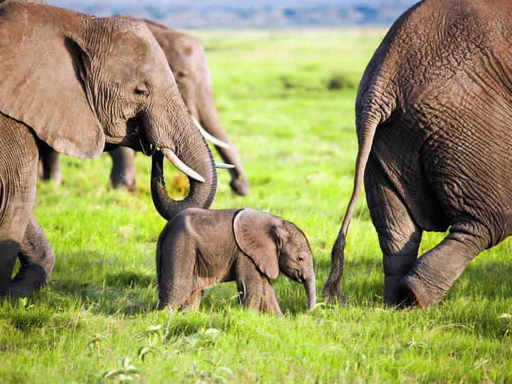 Tmx 1448386299854 Travel African Safari Elephants East Brunswick wedding travel