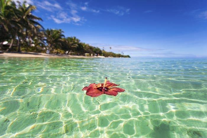 Tmx 1448386374854 Travel South Pacific Fiji Flora East Brunswick wedding travel