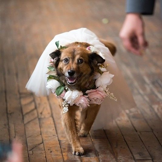 Tmx Brooklyn Wedding Dj 1 51 986373 1565293722 Brooklyn, NY wedding dj