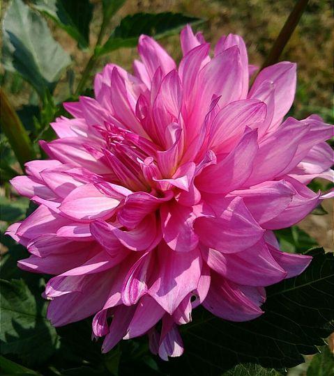 Hottie-bouquet