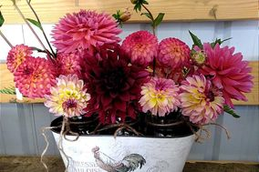 Lazy Day Dahlias