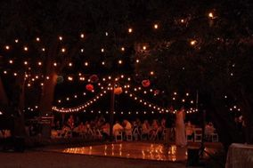Weddings at Reptacular Animals Ranch in the Forest