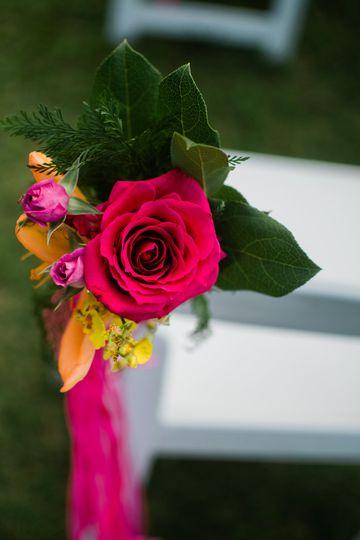 Pink tropical roses