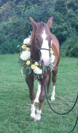Tmx 1411874859159 51 712873 157664692087967 Albrightsville, PA wedding florist