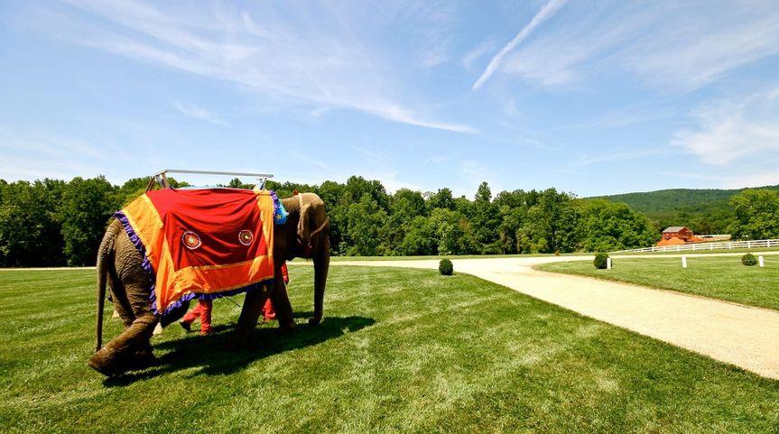 Elephant Carriage