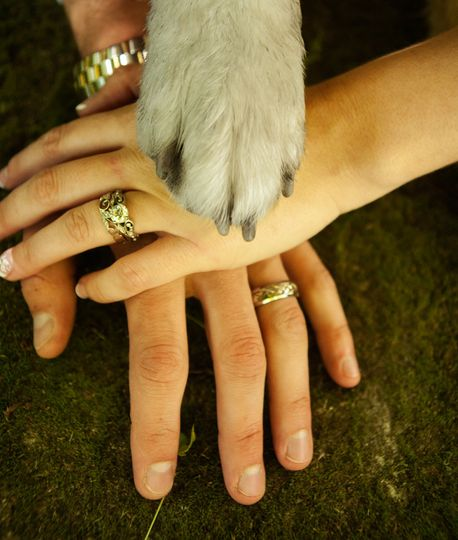 hands and paws