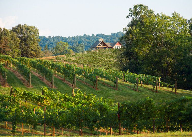 Addison Farms Vineyard