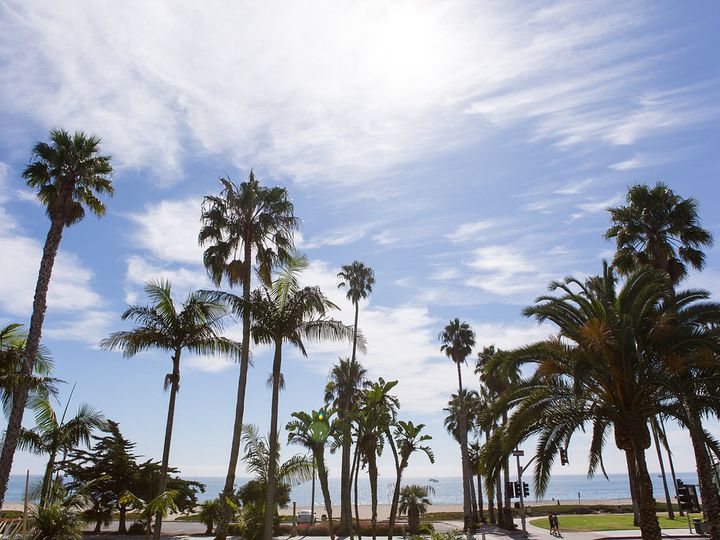 Tmx Palmtrees3 51 1049283 Venice, CA wedding travel