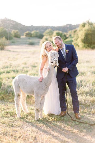 Bride+Groom with Alpaca