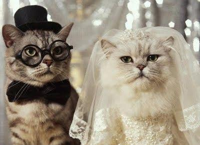 Tmx 1419125243906 Catweddingpic Bronx wedding planner