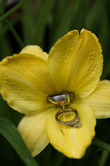 all rings in yellow lilly fb