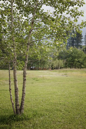 Tree Groves at Bodhi Farms