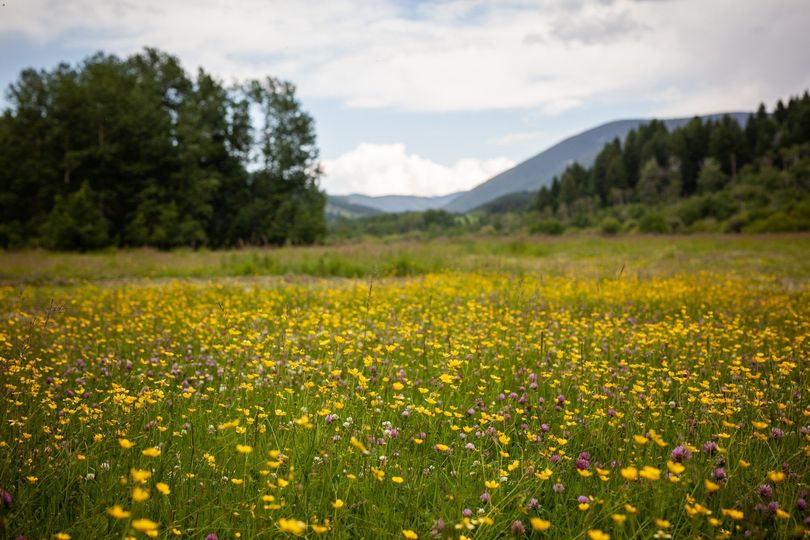 Wildflowers at Bodhi Farms
