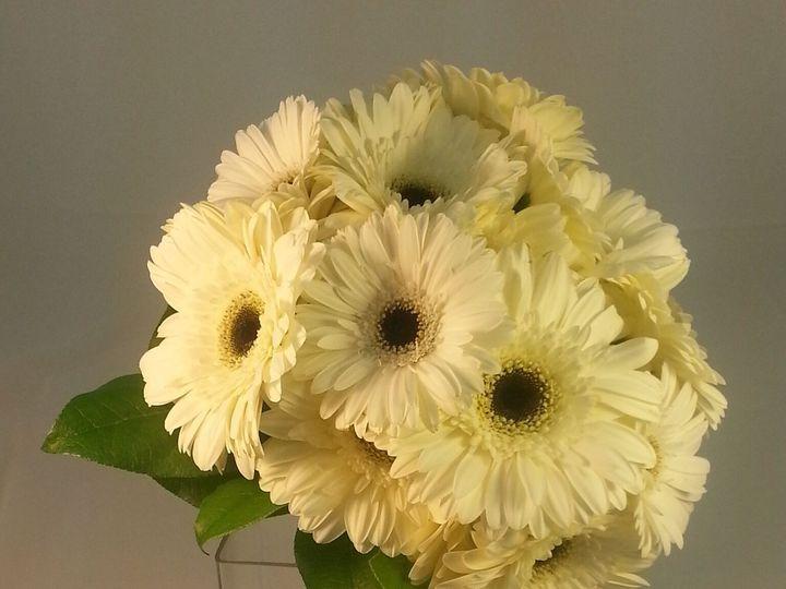 Tmx 1474913754162 White Gerbera 92016 Bensalem wedding florist