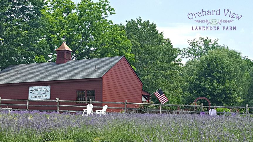 The lavender farm stand