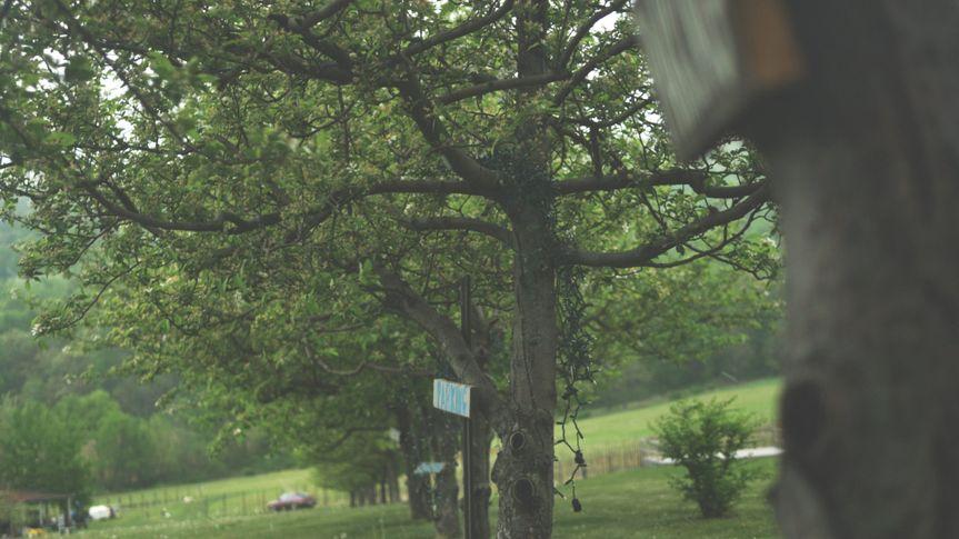 trees dolly