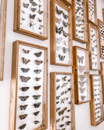 The Bridal Ste Butterfly Wall