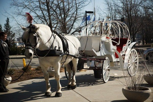 800x800 1324051184601 weddinghorsecarriage