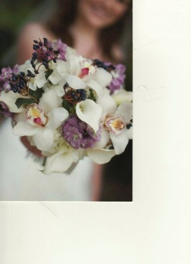 Botany by Jennie Hedges