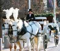 Threejays Carriages