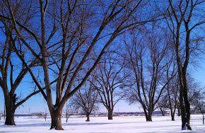winter front yard