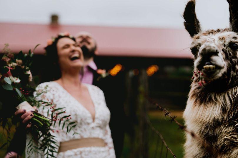 When a llama eats the bouquet