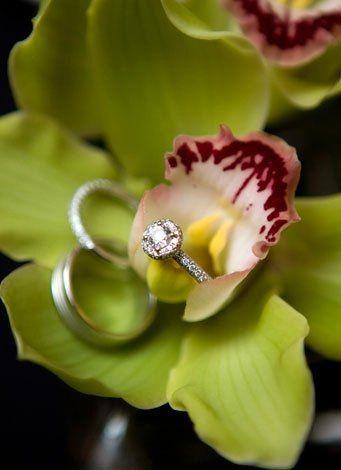 manningringorchid