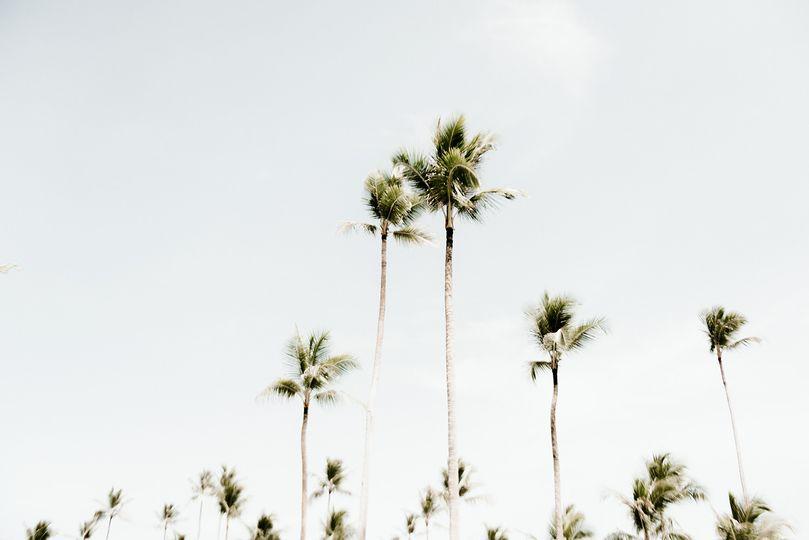 Palm trees Punta Cana wedding