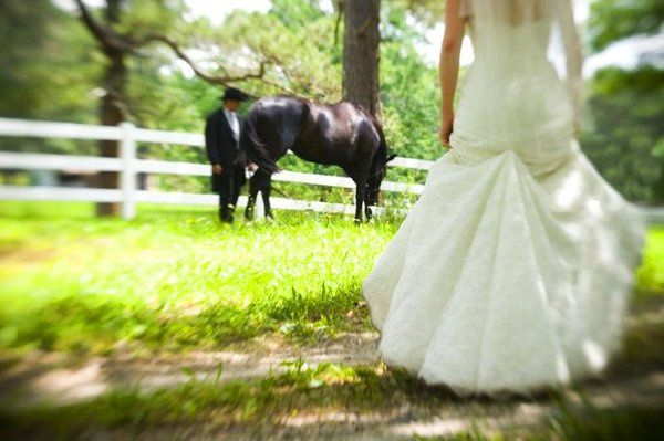 outdoor wedding, horses, farm,