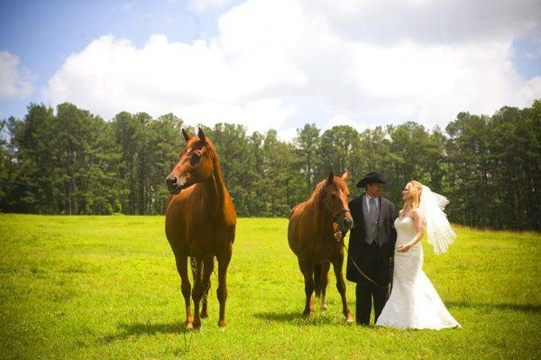 Horses, Bride and Groom, outdoor weddings