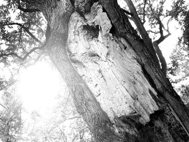Tmx 1384537576935 Big Tree Dramatic Light Kiss Smal Mount Joy wedding venue