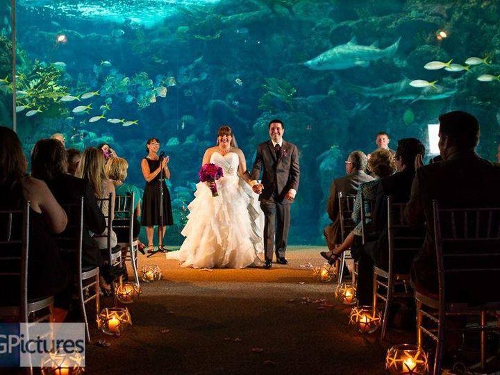 Tmx 1441304035832 Aquarium Clearwater, Florida wedding officiant