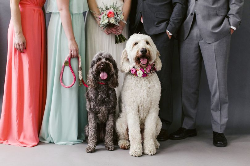 Dogs at the wedding