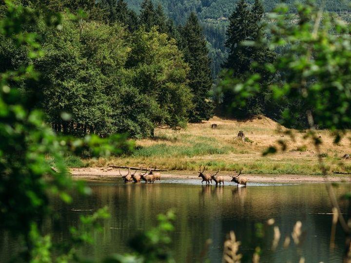 Tmx Cl Elk In Lake 51 619014 158627065462749 Eatonville, WA wedding venue