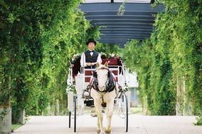 Lotsa Spots Carriage Service