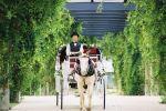 Lotsa Spots Carriage Service image