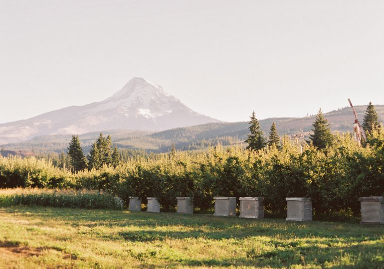 mt view orchard mt hood 2