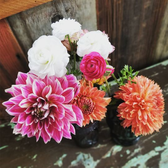 Dahlia arrangement done with flowers grown in out fields and gardens.
