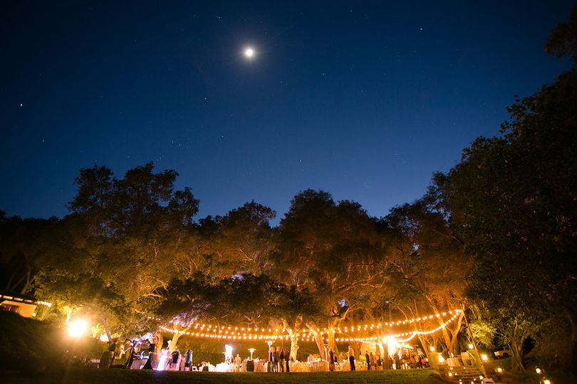 Reception under a canopy of oaks & sting lights
