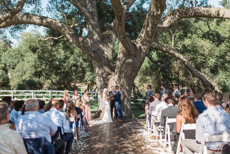 Wedding ceremony under a 500 year old oak tree