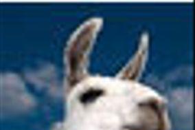 Hyper Llama