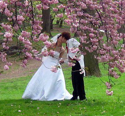 Spring Blossom Wedding Kiss