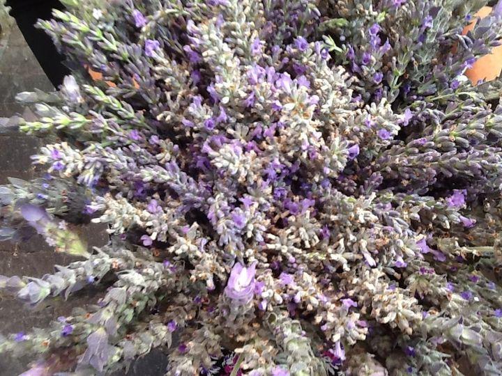 Beautiful lavender bouquet