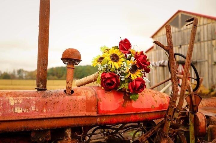 Old tractor looks amazing